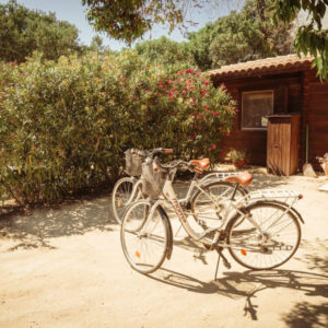 Finca Mood- Bikes 3